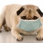 花粉症の改善に!たった200円痛くない鼻うがいで鼻づまりを解消